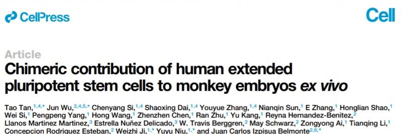 这名科学家造出了人-猴混合胚胎他想解决什么问题